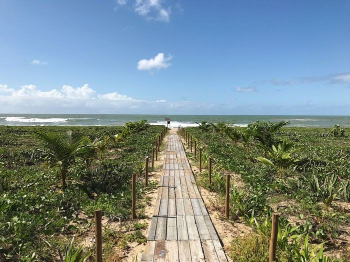 Sea Water Sky Horizon Over Water Scenics Nature Tranquil Scene Tranquility Beauty In Nature Day Cloud - Sky Outdoors Growth No People Wood Paneling The Way Forward Jetty Blue Beach Grass Brazil Bahia Camaçari Done That.