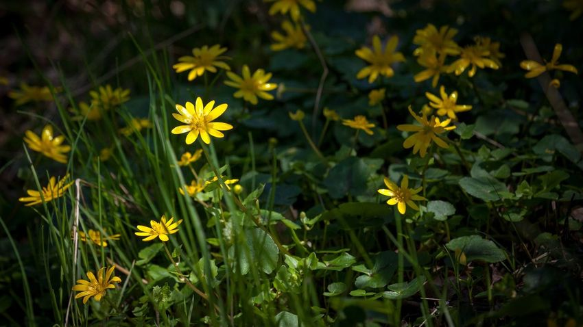 Paradise track Beauty In Nature Close-up Field Flower Flower Head Flowering Plant Fragility Freshness Green Color Growth Inflorescence Land Leaf Nature No People Outdoors Petal Plant Plant Part Vulnerability  Yellow
