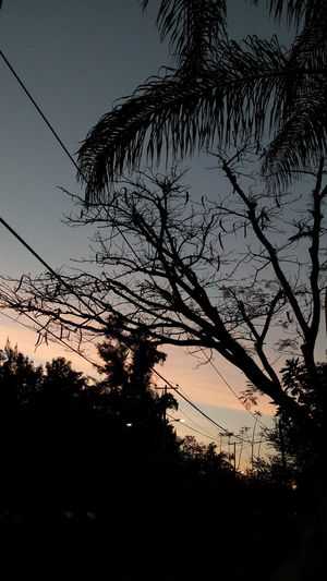 Atardecer urbano Goal Future Urban Sunset Silhouettes Peace And Quiet Peace Peaceful Peac Tree Sunset Silhouette Sky Telephone Line Cable