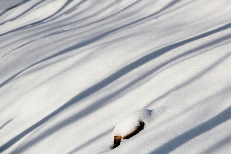 Close-up Day Low Sun Nature No People Outdoors Shadow Shadows & Lights Slanting Shadows Snow Snowbound Striped Pattern White Color Shades Of Winter