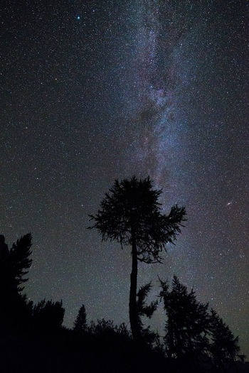 Milky way above silhouetted pine tree Astronomy Beauty In Nature Bright Constellation Galaxy Glowing Infinity Landscape Low Angle View Majestic Nature Nature Night No People Outdoors Scenics Silhouette Sky Space Star Star - Space Star Field Tranquil Scene Tree