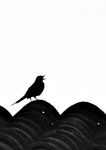 Blackandwhite Birds Minimalism Simplicity