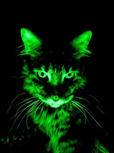 Green Amali