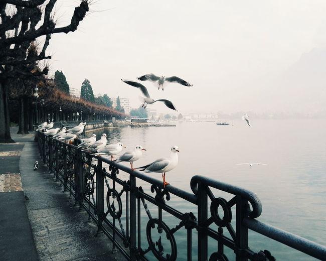 Art Is Everywhere Lugano, Switzerland. Lugano Lake Cloudy Weather⛅☁ Beauty In Nature Tranquility Day Lake Nature