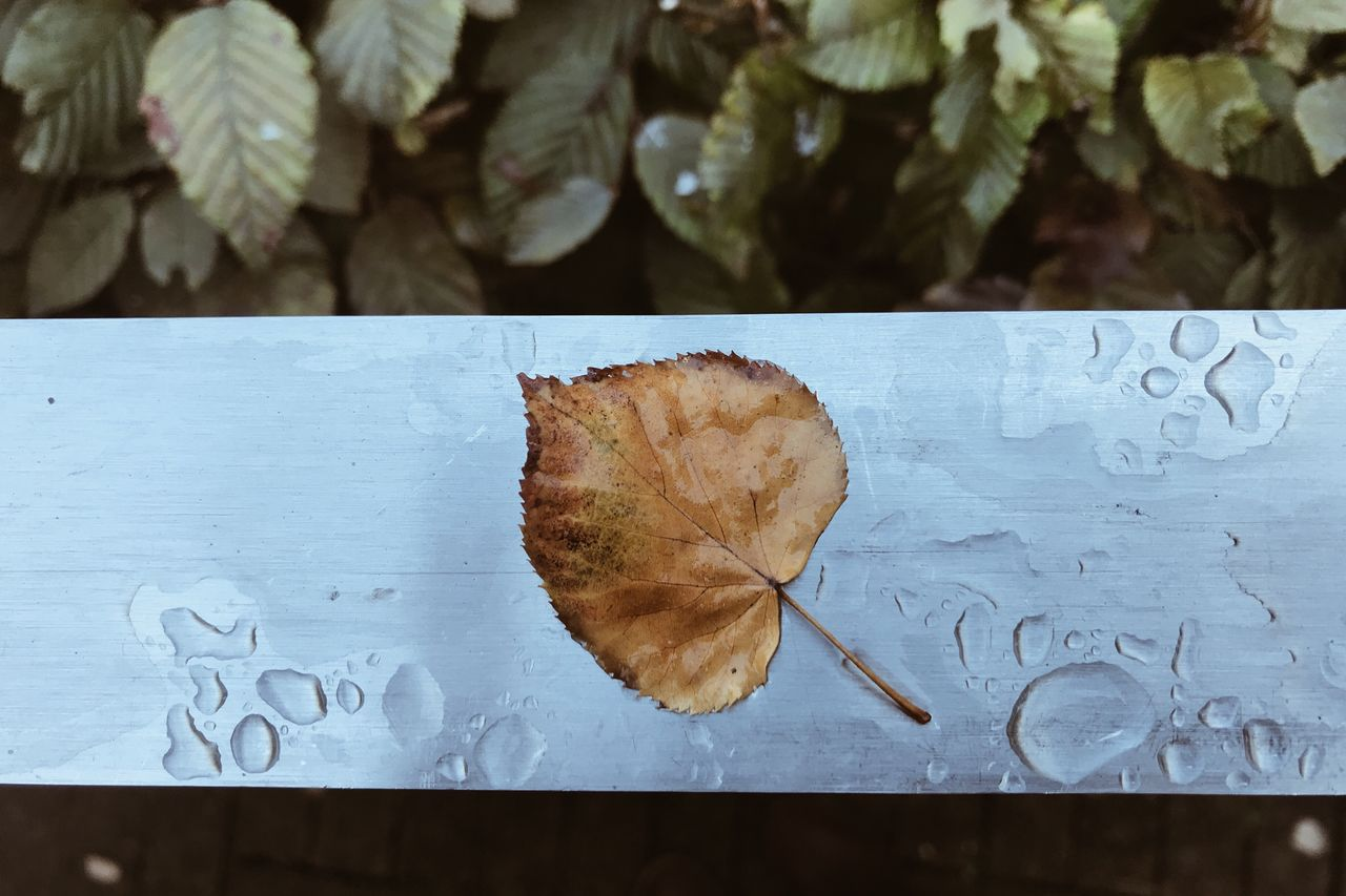 leaf, autumn, no people, close-up, text, change, day, table, outdoors, nature, freshness, beauty in nature, maple