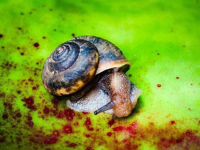 One Antenna Animal Animal Themes Animal Wildlife One Animal Animals In The Wild Invertebrate Close-up Animal Shell Nature Shell