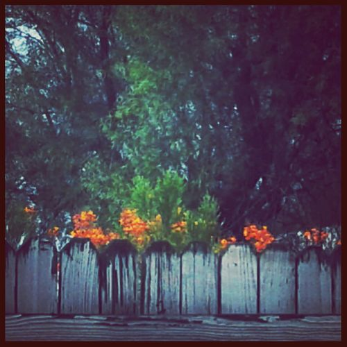 Tree Outdoors No People Nature Day Shrubbery Arizona Petal Still Life Blooming Landscape Summer Stormy Weather Weathered Fence White Fence Tree Plant Flower