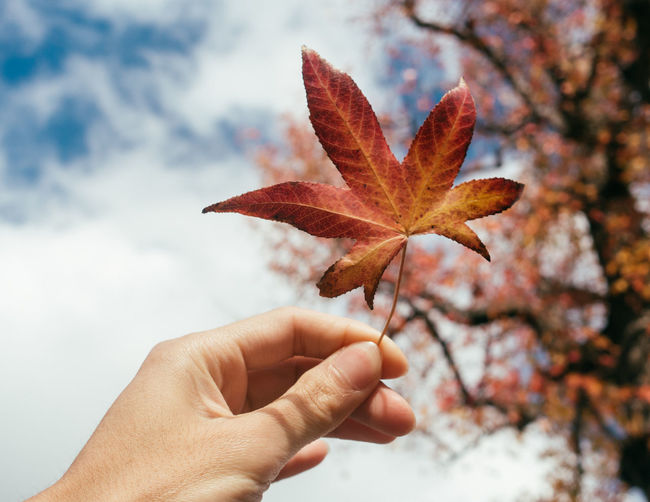 Holding Human Body Part Human Hand Leisure Activity Maple Maple Leaf Mapleleaf Nature Outdoors Sky