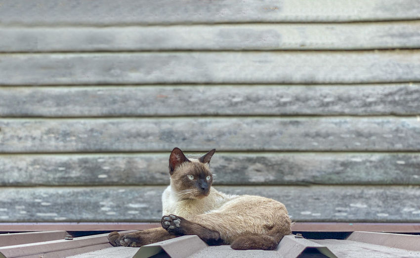 Cat sitting on bench against wall
