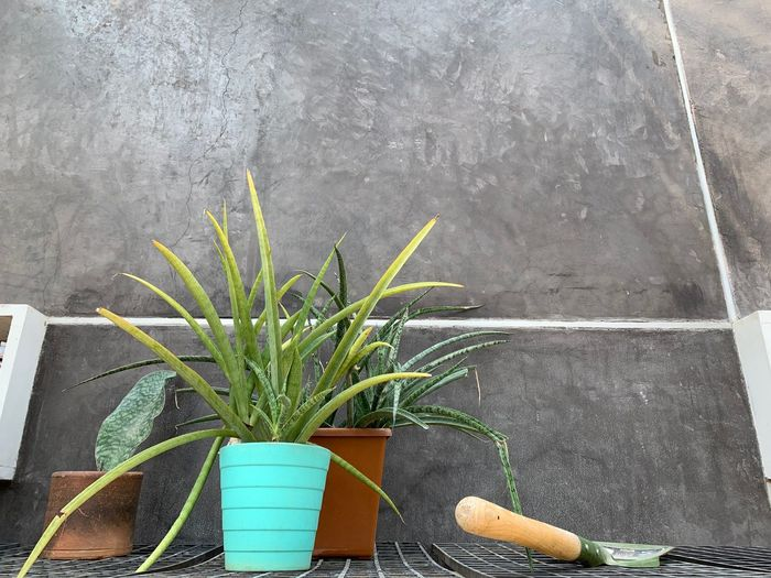 Plant Growth Green Color Potted Plant Day Nature Wall - Building Feature No People Outdoors Plant Part Leaf Close-up High Angle View Wood - Material Water Flooring Freshness Table Gray Houseplant Flower Pot