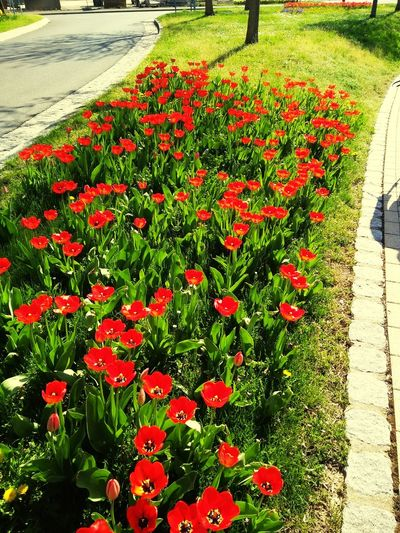 sunny days everyone is out to enjoy Flower Flower Head Red High Angle View Grass Plant Green Color