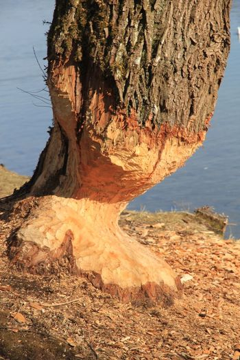 Nature Tree Work Beauty In Nature Bibber Biber Day Landscape Nature Outdoors Water