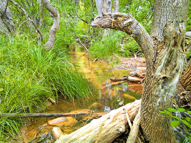 Arizona Broken Day Favorite Place Forest Grass Growing Log Nature No People Oak Creek Outdoors Rock Stone Swimming Hole Water