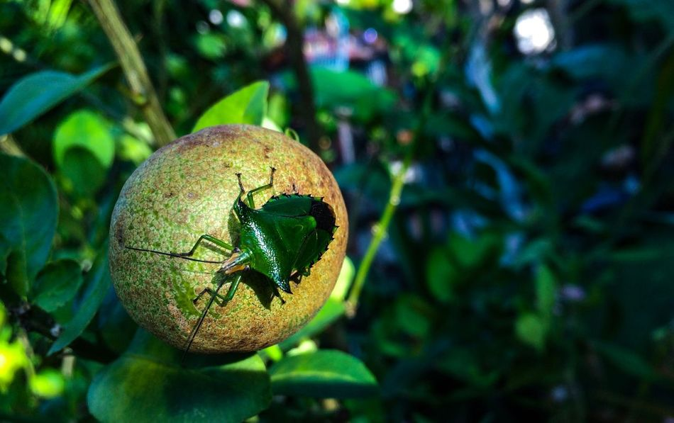 EyeEmNewHere EyeEm Nature Lover Eyemphotography Close-up Green Color Focus On Foreground Plant No People Nature Growth Food And Drink Food Plant Part Outdoors Leaf Animal Sphere Animal Themes Tree Freshness Animal Wildlife Day One Animal