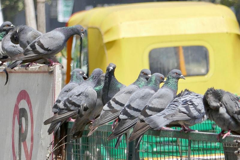Birds perching on metal