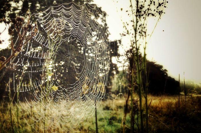 Cobweb Morning Nature EyeEm Nature Lover
