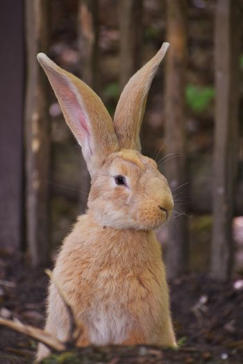 Close-up of a rabbit on land