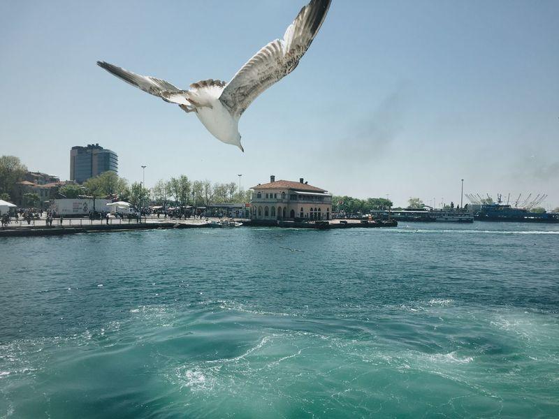 Gull-spotting Istanbul