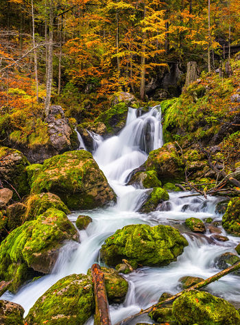 Autumn Beauty In Nature Day Forest Gesäuse Long Exposure Motion Nature No People Outdoors Scenics Tranquil Scene Tranquility Tree Water Waterfall