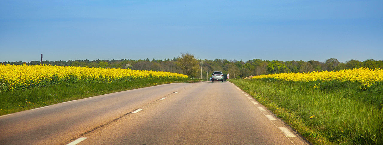 Beauty In Nature Country Road Diminishing Perspective Field Flower France Growth Landscape Nature Outdoors Road Scenics Sky The Way Forward Yellow