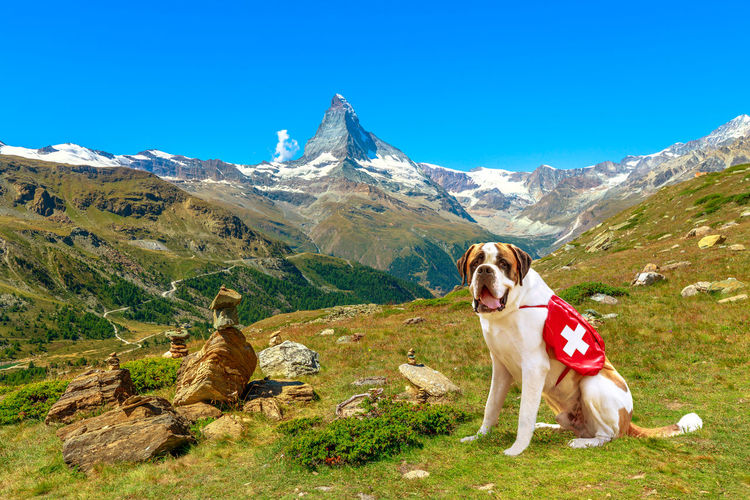 Dog sitting on mountain against sky
