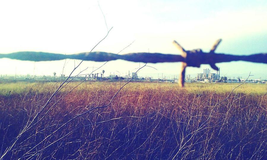 Trespass Field