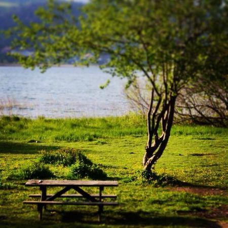 Abant Yeşil Yalnız Sakin