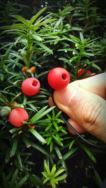 Two Is Better Than One Human Finger Close-up Growth Freshness Green Color Nature Red Outdoors Fruit Headphones Fun Funny Moments Plant Part Of Naturelovers The Magic Mission The Color Of Technology Chance Encounters Nature Design