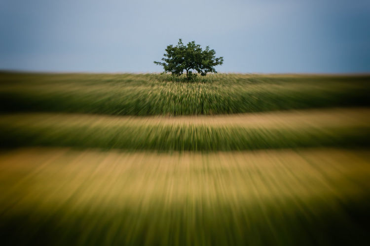 Motion Blur Rural Speeding Tree Bare Tree Beauty In Nature Blurred Motion Clear Sky Countryside Day Field Grass Growth Landscape Motion Nature No People Outdoors Rural Scene Scenics Sky Speed Tranquil Scene Tranquility Tree