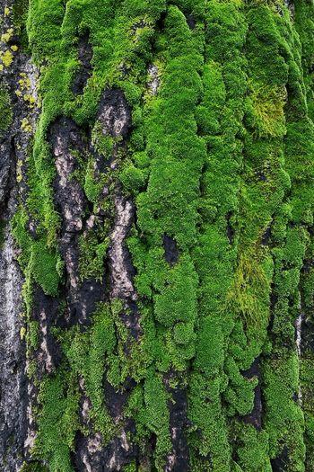 High angle view of moss growing on tree