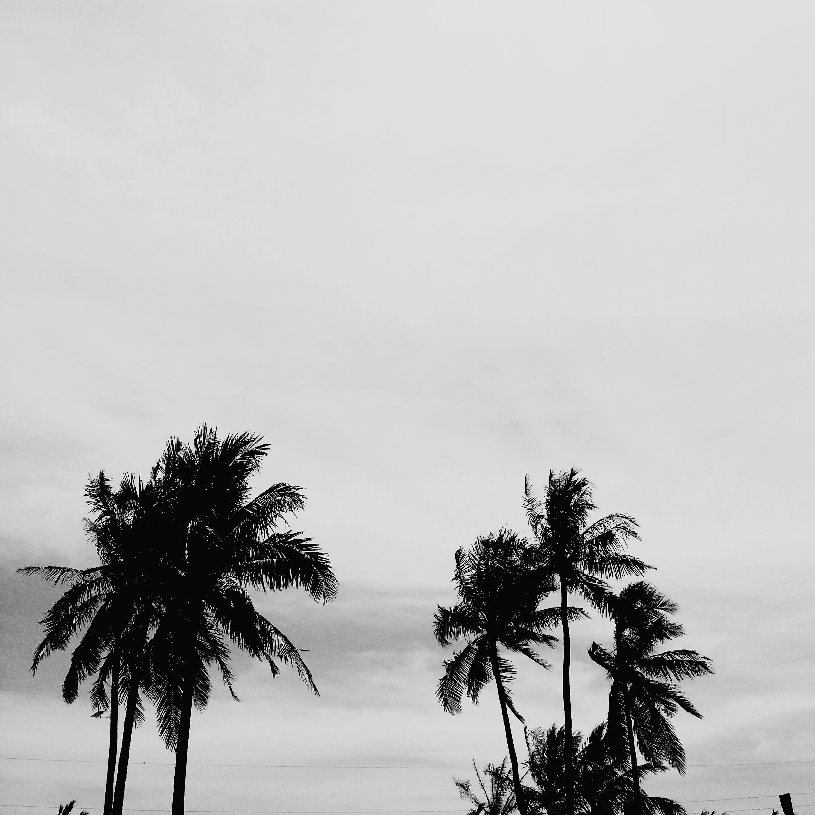 palm tree, low angle view, silhouette, tree, sky, tranquility, growth, nature, beauty in nature, sunset, tranquil scene, scenics, tree trunk, dusk, branch, cloud - sky, no people, high section, outdoors, copy space