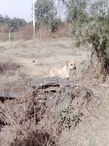 Dogs Paisaje Sèquia Perros  Perro Callejero Mascotas