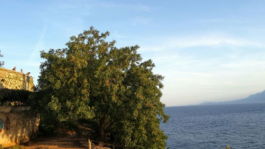 Yaşamak sadece sevmektir, inan bana. Sevmeyenler dünyamızda yaşamıyor. Yaşamak suda, toprakta, insanlarda görünerek; bir zeytin ağacı gibi. Bir zeytin ağacı gibi, ne güzel denize yakın olacaksın, uzayan dallarında, yapraklarında ışık ta derinlerde köklerin. Bir zeytin ağacı gibi, bin yıl severek yaşamak her gün.. (Arif DAMAR)..... Tree Nature Growth Beauty In Nature Outdoors Sky Sea Scenics Untold Stories Capture The Moment Eternity And A Day Ineedamiracleformylostsoul EyeEm Best Shots EyeEm Gallery Landscape Alone In The World BenimAdımZeytin ZeytinAğacınaSadakat Clouds And Sky Sea And Sky