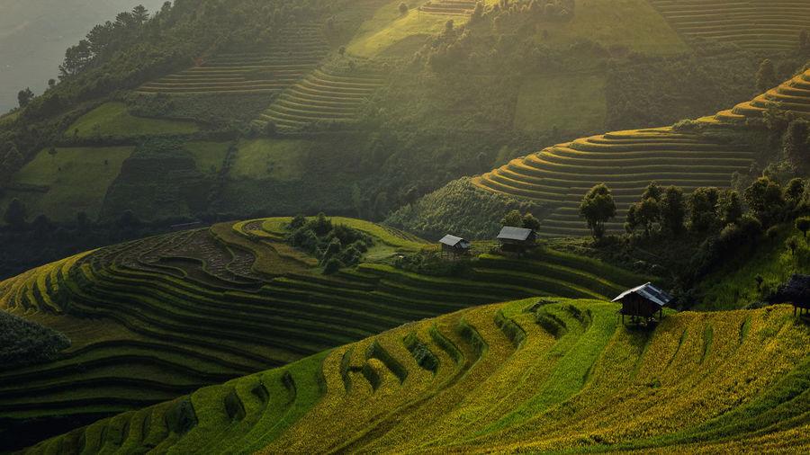 Green rice fields on terraced in muchangchai, vietnam rice fields prepare the harvest