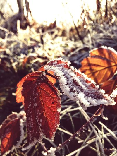Nature Animal Themes Focus On Foreground Outdoors No People Day Close-up Leaf Tree Animals In The Wild One Animal Insect Beauty In Nature