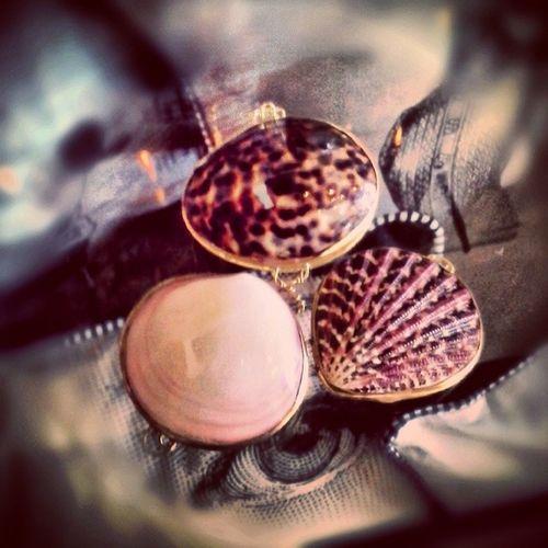 Mermaid Purses, Small $12.95 ea Shell Sea_shell Cockles Purse mermaids accessories clasp