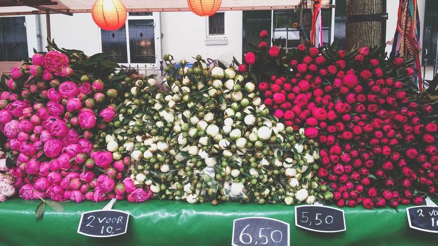 Pink flowers in market for sale