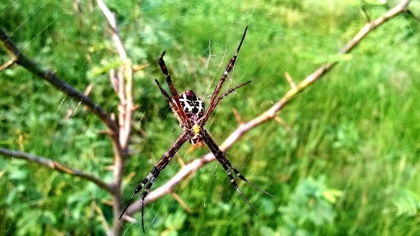 Spider Spider Web Animals In The Wild One Animal Animal Wildlife Animal Themes Focus On Foreground Web Day Insect No People Animal Leg Outdoors Close-up Beauty In Nature Fragility Architecture Cloud - Sky One Man Only Domestic Animals Springtime One Person Survival Nature Full Length