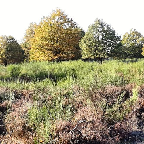 Rösrath, Wahner Heide Rösrath Wahnerheide Köln Bergisch Bergischesland Heide Heathland  Herbst Herbstfärbung Autumn Autumncolours Tree Agriculture Field Rural Scene Sky Grass
