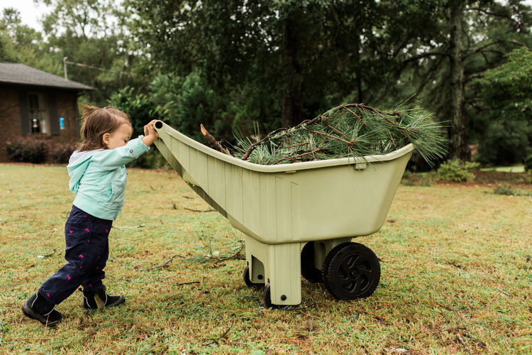 Girl helping to clean up after Hurricane Irma Cleaning Debris Destruction Fallen Tree Hurricane Irma 2017 Storm Stormy Weather Tree Trunk Trees Child Childhood Fallen Front Or Back Yard Girl Grass Hurricane Kid Nature One Person Outdoors Real People Toddler  Wheel Barrow Wind Yard