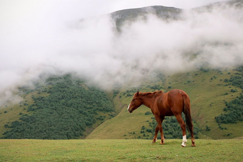 Horse on field against mountain