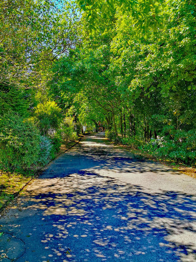 View of footpath by trees