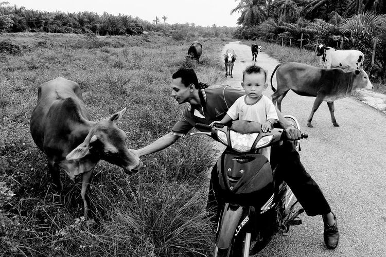 A Malay People sharing a happy moment with his cows...must be share this moment! Blackandwhite Photography Cows EyeEm Malaysia Kampung Lifestyles Livestock Malaysia Malaysian Nature Outdoors Showcase May Streetphotography The Great Outdoors - 2016 EyeEm Awards People And Places
