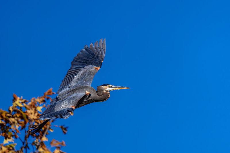 Bird Vertebrate