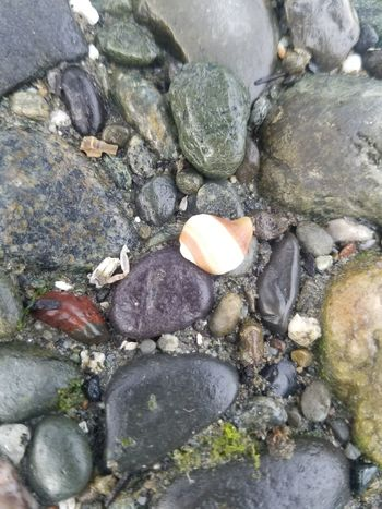 Close-up Day High Angle View Nature No People Outdoors Pebble Pebble Beach Rock - Object Water