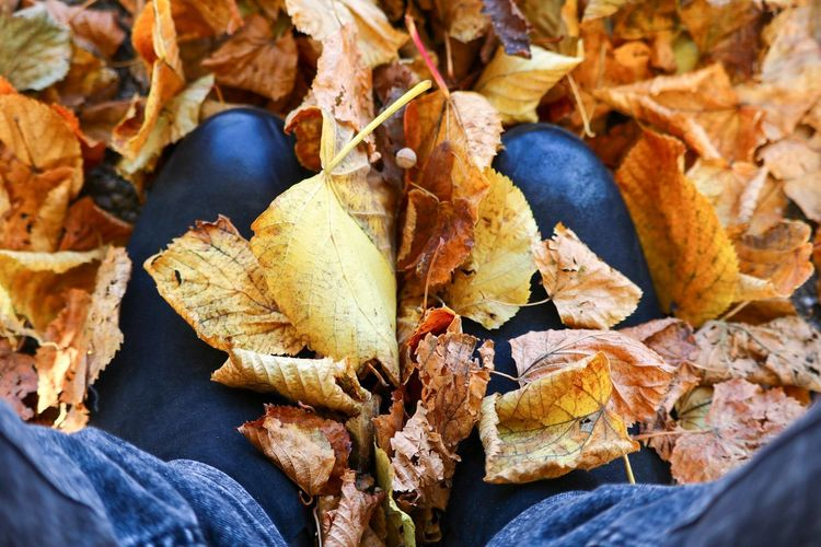 Autumn Autumn Autumn Colors Autumn Leaves Autumn🍁🍁🍁 Beauty In Nature Boots Change Close-up Day Dry Fallen Fragility Large Group Of Objects Leaf Leaves Leaves_collection Leaves🌿 Nature No People Outdoors Schoes