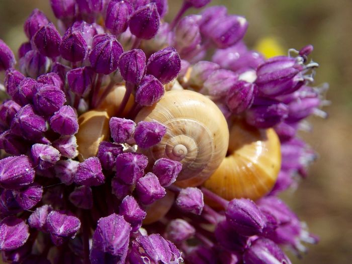 Close-up of snail on flowers