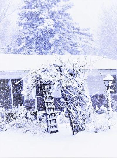 snowstorm Snow Snowstorm EyeEm Nature Lover EyeEm Best Shots White Color Winter Arch