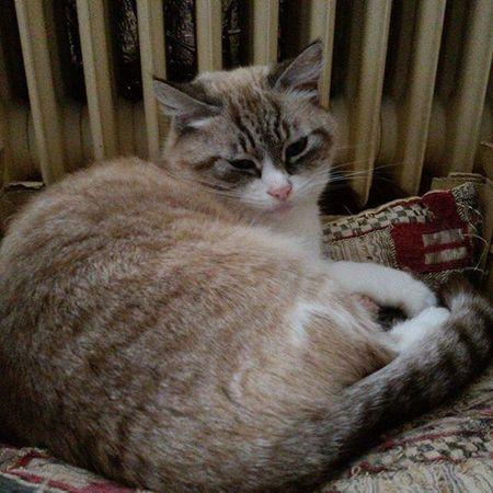 Luna Mylove Mycat LeChat Cat Miao Meow Gatta Lovelycat Beautiful Lovely Sweet Kitty Riposo Micioriposino ❤ 😚