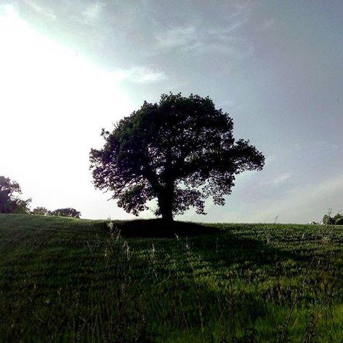 Albero: l'esplosione lentissima di un seme. - B. Munari Albero Seme Citazione Tree Treeoflife Nature Green Lategram Paesaggio Landscape Cielo Sky Paysage Marche Montefeltro Italia Italy